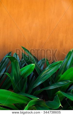 Traditional Moroccan Terracotta Colored Background With Green Tropical Leaves Below. Orange Or Ocher