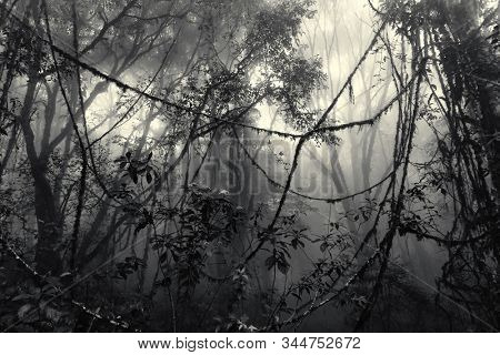 Misty tropical forest with tangled lianas in early morning, vintage tinted edition