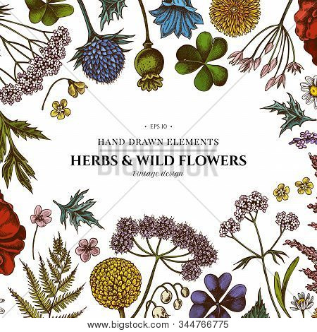 Floral Design With Colored Shepherds Purse, Heather, Fern, Wild Garlic, Clover, Globethistle, Gentia