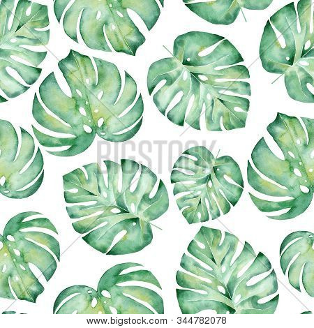 Monstera Leaves Watercolor Hand Drawn Seamless Pattern Illustration. Trendy Tropical Plant Drawing B