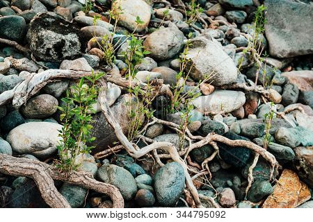 Small Green Sprouts Of Tree Grows From Roots. Nature Sunny Background Of Beautiful Roots Of Deciduou