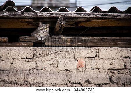 Los Gatos, Los Vecinos En La Ciudad