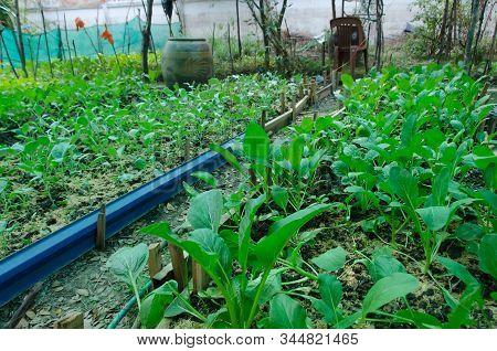 Non-toxic Vegetable Garden Plot Of Thai Gardeners Outdoor