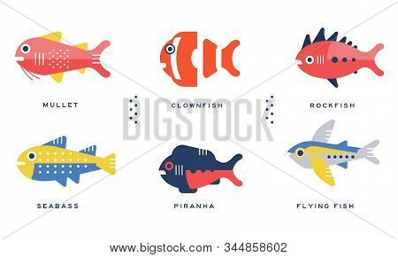 Sea And Ocean Fishes Collection, Mullet, Clownfish, Rockfish, Seabass, Piranha, Flying Fish Vector I