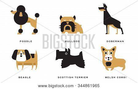 Breeds Of Dogs Collection, Poodle, Bulldog, Doberman, Beagle, Scottish Terrier, Welsh Corgi Vector I