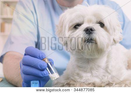 Vet holding homeopathic globules for a little maltese dog