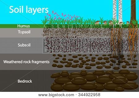 Soil Layers. Diagram For Layer Of Soil. Soil Layer Scheme With Grass And Roots, Earth Texture And St