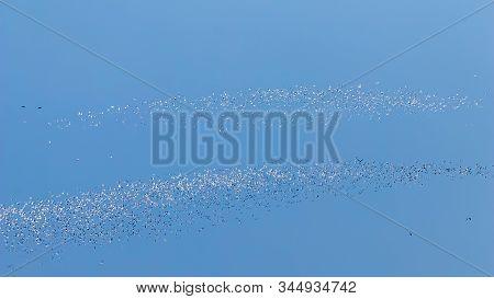 Flying Seagulls, Flock Of Seagulls In Flight