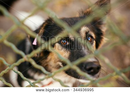 Portrait Of Cute Scared Fluffy Dog Sitting Behind Metal Fence In Summer Day. Adoption From Shelter C