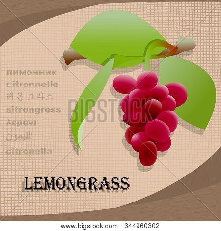 Label Sticker With Seasoning Lemongrass Vector Image