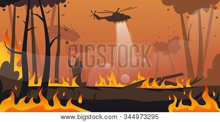 Helicopter Extinguishes Dangerous Wildfire In Australia Fighting Bushfire Dry Woods Burning Trees Fi