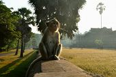 Temple Monkey sit on ruined fence in Angkor Wat World Heritage site Siem Reap Cambodia poster