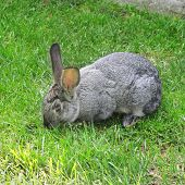 an image of single rabbit in green grass poster