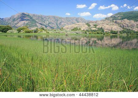 Vegetation and Lake Sanabria, Zamora.