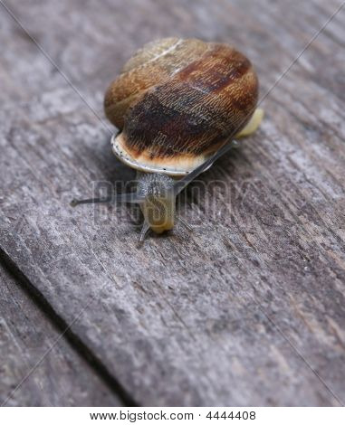 Slowly Moving Snail