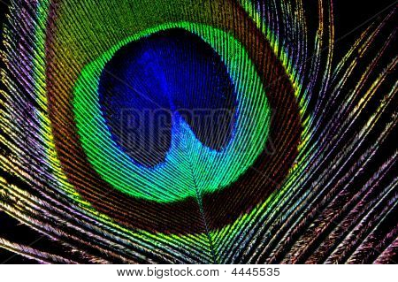 The Eye Of The Feather