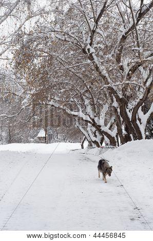 A stray dog runs along the alley winter. poster