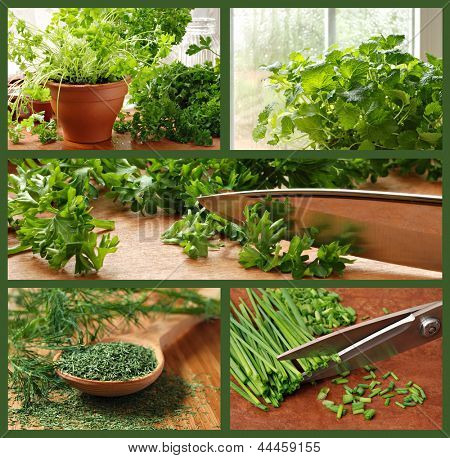 Herb collage includes images of parsley, chives, dill, lemon balm, and a kitchen garden.
