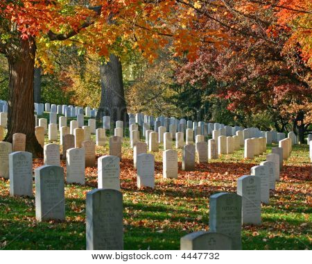 Arlington Cemetary Fall Foliage