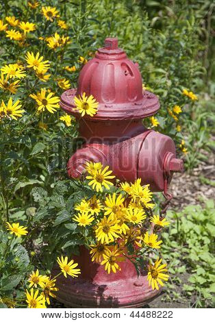 Brown-eyed Susans and Red Fire Hydrant