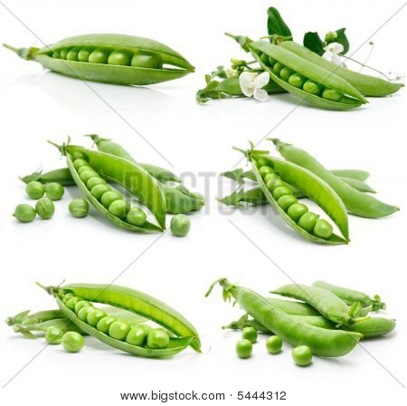 Set Of Fresh Green Pea In The Pod Isolated