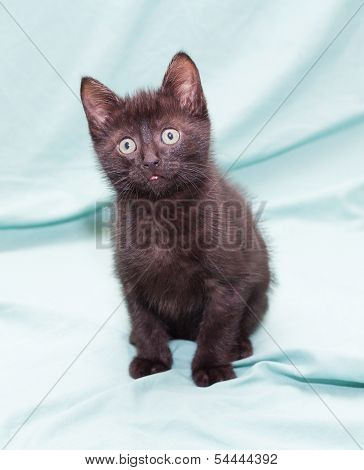 poster of Black fluffy kitten with green eyes sitting looking up on pale green background