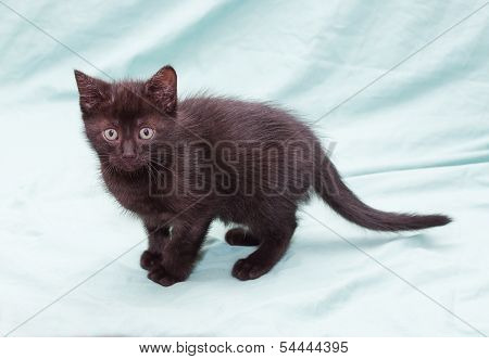 poster of Black fluffy kitten with green eyes standing on pale green background
