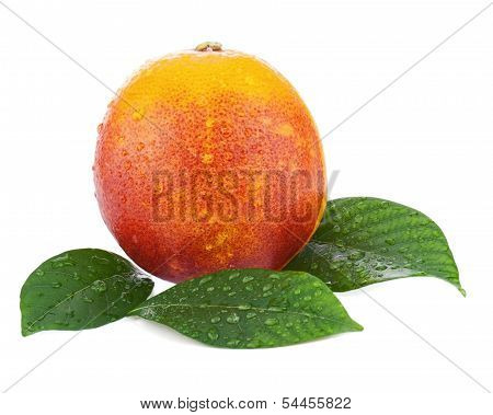 Ripe Red Blood Oranges With Green Leaves Isolated On White Background.
