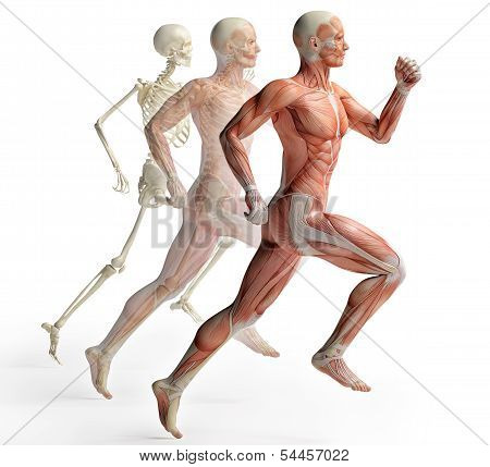 isolated male anatomy and skeleton in motion poster