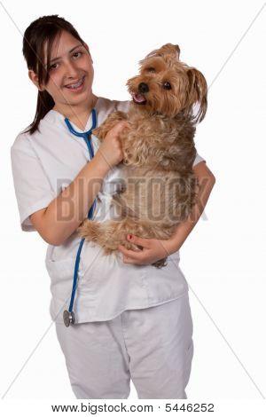 Animal Nurse