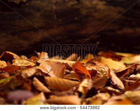 Autumnal Background With Fallen Leafs On The Ground