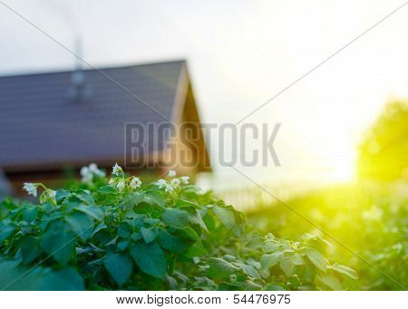 Beautiful Sunset In Green Garden With Garden House