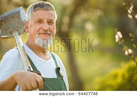 Portrait of a handsome senior man gardening in his garden (color toned image)