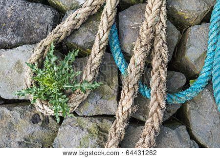 Closeup Of A Small Heap Of Ropes