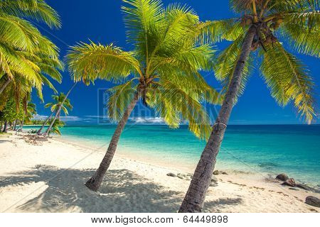 Deserted beach with coconut palm trees on Fiji Islands