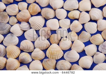 Shells on a blue background