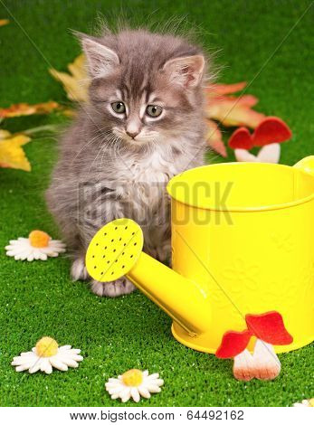 Cute gray kitten with yellow watering can on artificial green grass