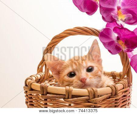 Little funny kitten