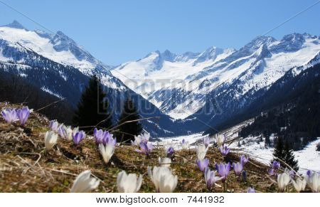 Spring in Mountain-Valley