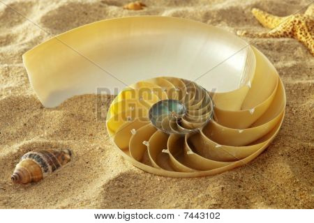 Sea Jewels On Golden Grains Of Sand.  Close-up Of Nautilus Shell On Golden Sand With Starfish And Sm