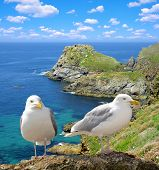 Seagulls on the coast of the Atlantic Ocean -  Pointe du Van, Brittany, Northern France poster