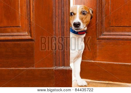 Nosy Dog At The Door