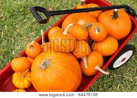 Pumpkins in Red Wagon