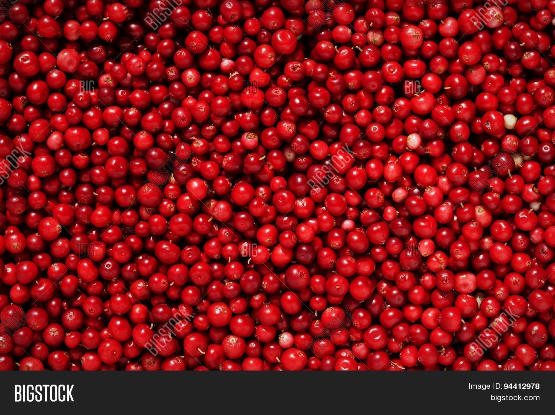 Red Cowberries, Food Image & Photo Free Trial   Bigstock
