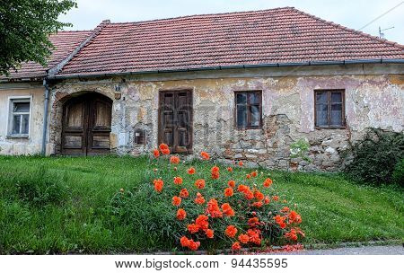 Czech House With Poppies