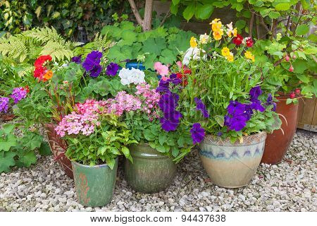 Colorful Potted Plants In Garden Corner.