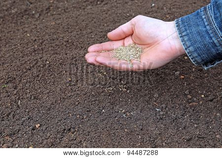 Sowing Grass Seed Into The Soil On The Lawn