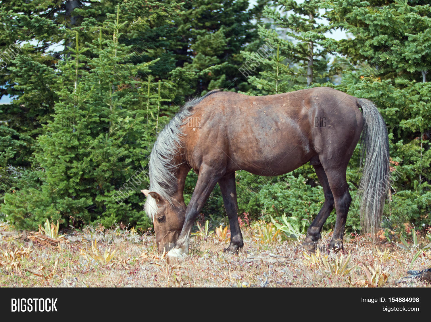 Wild Horse Sooty Image Photo Free Trial Bigstock