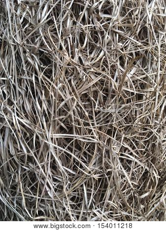 background of dry yellow hay grass background of dry yellow hay grass