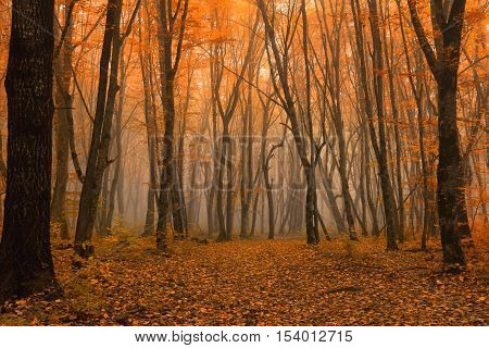 Awesome autumn landscape with mysterious foggy forest